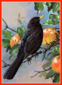 Bird with apples.GIF